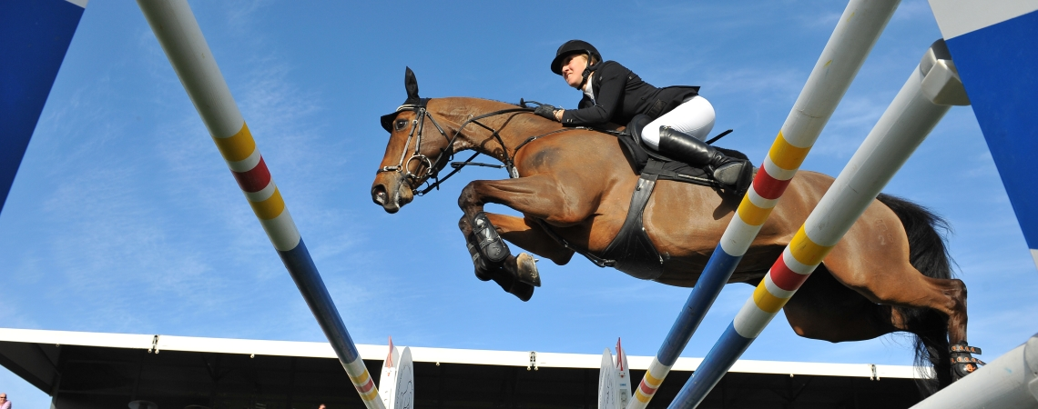 New To showjumping